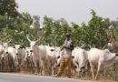 Could A Vital Lesson For The President's RUGA Settlement Project Lie In Fadama? By Akinyemi Muhammed