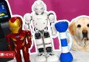 Coronavirus: Can these robot roommates liven up lockdown?