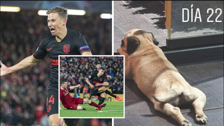 Llorente Names Dog Anfield After Scoring Against Liverpool