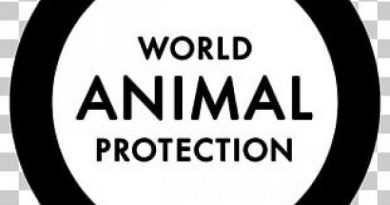Covid-19: G20 Must Ban Wildlife Trade To Protect Animals