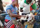 GALVmed announces three new projects to accelerate animal healthcare in West Africa