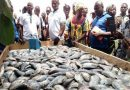 'Light Fishing By Tuna Boats Against Ghanaian Law' — Environmental Justice Foundation
