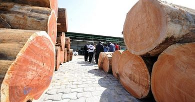 Government Urged To Use Its Purchasing Power To Drive Sustainability In The Domestic Timber Trade