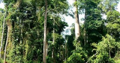 CSOs, Individuals Sue Gov't Over Exploration At Atewa Forest