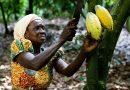 Cocoa Advocacy Initiative Set To Launch