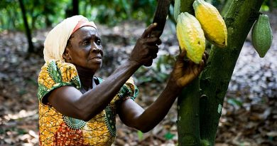 Cocoa Advocacy Initiative Set To Launch