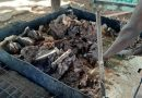 Dog Meat Patronage Fall In Builsa North District