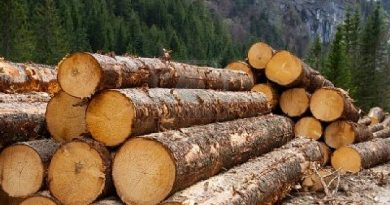 Consolidate Sir John's Gains—Domestic Timber Traders Urge New Forestry Boss