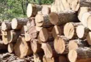 COVID-19: Forest Industries Appeal For Help To Access EU Market Via VPA-Flegt Processes