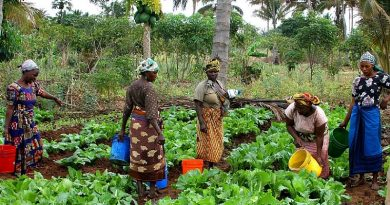 Integrate PPWDs And Women Into Planting For Food And Jobs (PFJs)