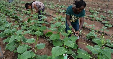 40,000 Young People In Nigeria To Benefit From Young Africa Works—IITA Project Training Program