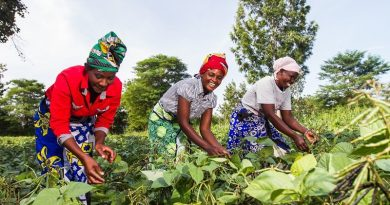 Climate Finance Neglects Small-Scale Farmers—New Report