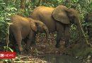 Endangered species: Gunshot detection technology deployed