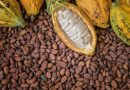 Ghana, Ivory Coast Fix Cocoa Prices To Stop Exploitation Of Farmers