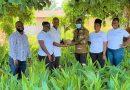 400,000 seedlings distributed to coconut farmers—GEPA