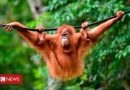 A palm oil alternative could help save rainforests