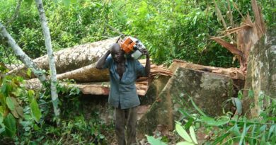Forest enterprises urged to keep proper records