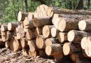 Ghana Timber Association Condemns Okyenhene's Task Force