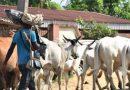Edo Youths Give 14-Day Vacation Notice To Fulani Herdsmen Over Killings – SaharaReporters.com