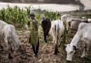 Groups give herdsmen 14 days to quit Edo forests over killings – Guardian
