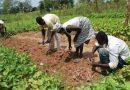 CCTU farm set to open soon—Prof. JD Owusu-Sekyere hints
