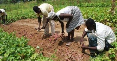 CCTU farm set to open soon—Prof. JD Owusu-Sekyere hints