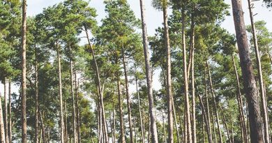 International Day of Forests: Commonwealth to bolster action on sustainable land use management on the road to COP26