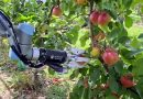 Robotic arm harvests apples and other technology news