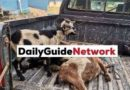 3 friends arrested for stealing goats, sheep, fowls