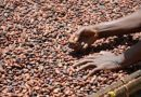 CAA partners with Mars Wrigley, Sucden, ASCOT and International Cocoa Initiative